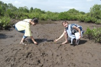 Planting Mangroves in a comunity-based reforestation project for Climate Change adaptation